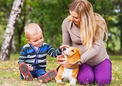 Proteggere il nostro cane da zecche e pappataci