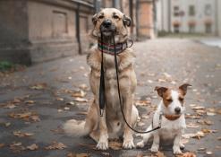 10 motivi per NON adottare un cane