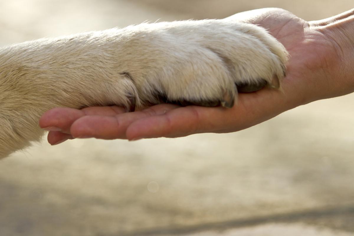 Alla scoperta della Pet Therapy